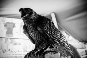 Hugin, one of Odin's ravens