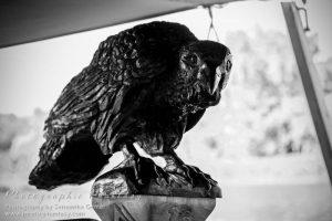 Munin, one of Odin's ravens